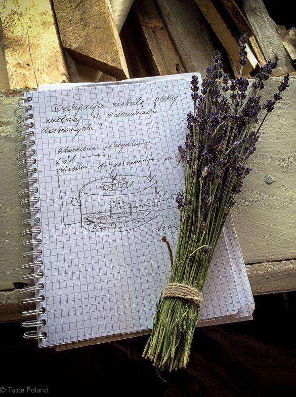 Warsztaty w Lawendowym Polu – NOWE KAWKOWO/WARMIA