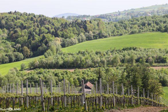 QUO VADIS polskie wino?
