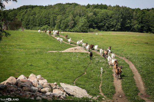 TEST-u-JEMY: Sery – Kozia Farma Złotna / WARMIA